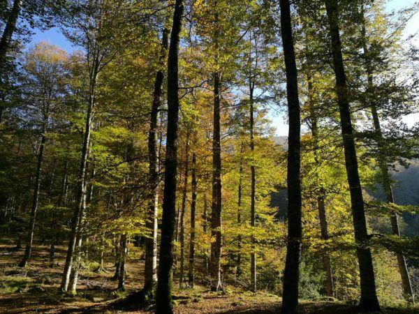 bosque-lekunberri